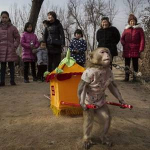 Affe mit Transport_n