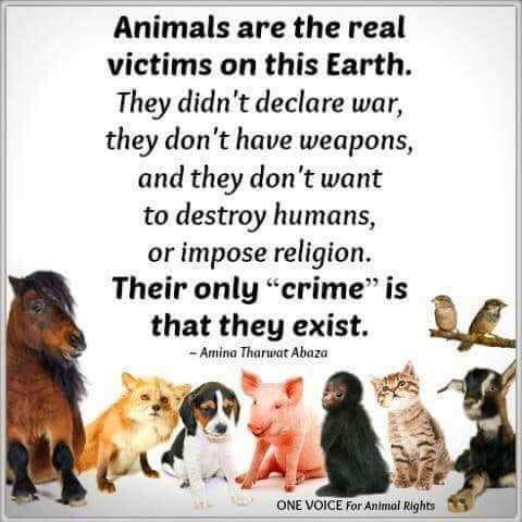 Animals are the real victims_n