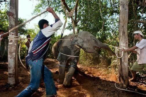 Arschlöcher schlagen Elefant