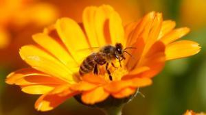 Biene-schönes Foto