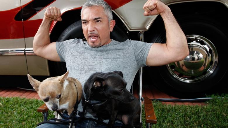 Cesar millan mit 2 Hunde