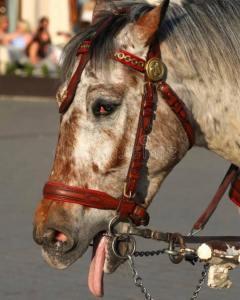 Kutsche Pferd_n