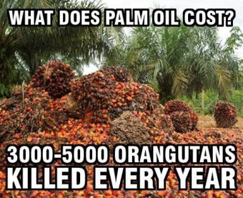 palm oil cost