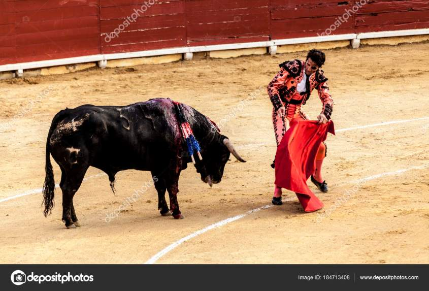 Corrida de toros.The last battle of the bull.The fight of a bull and bullfighter. Spanish bullfight. Corrida de toros.
