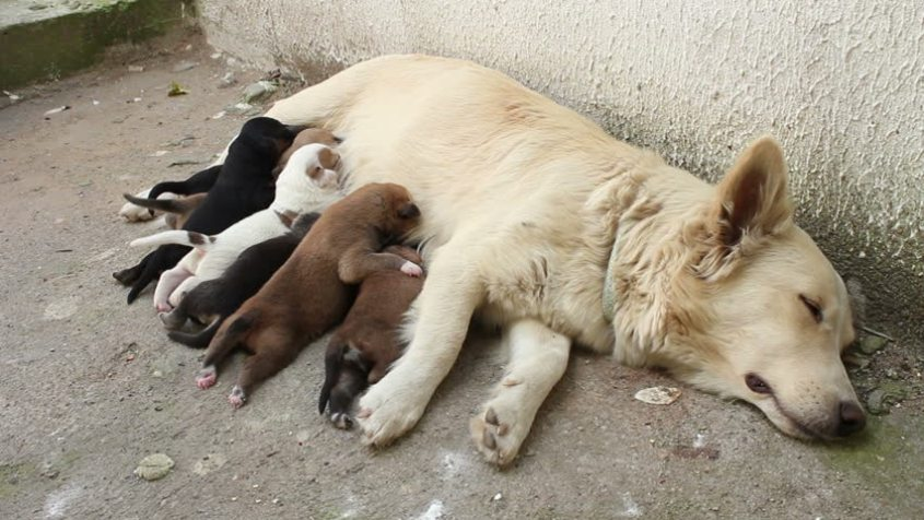 stray with pups 2