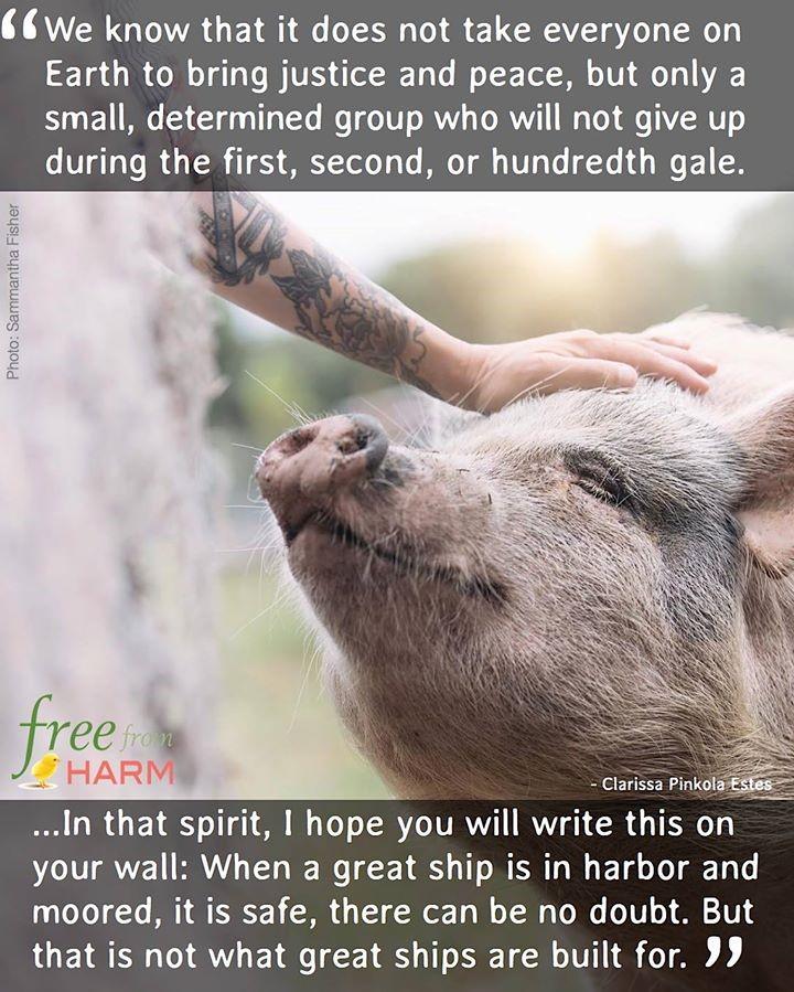 Zitat mit Schwein