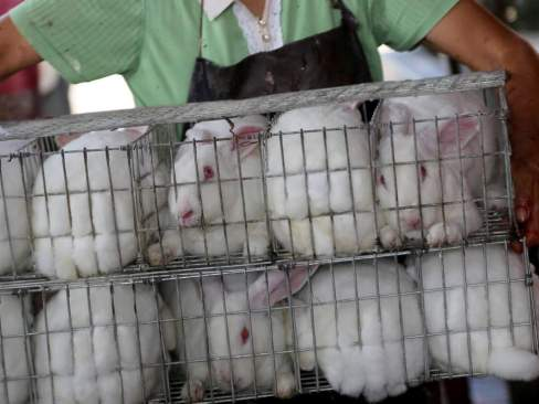 chinese fur farm rabbits
