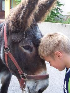 Donkey and boy