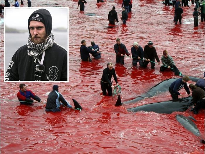 Faröer Schlacht mit Sea Shepart Aktivistjpg