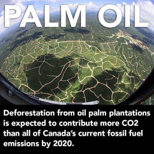Palm2