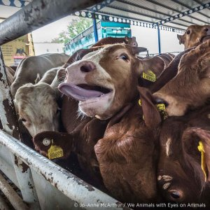 Tiere im Transport