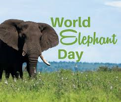 world elephant day 2