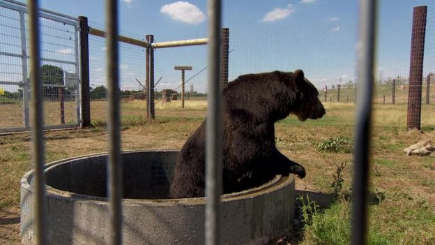 yorkshire bear 2