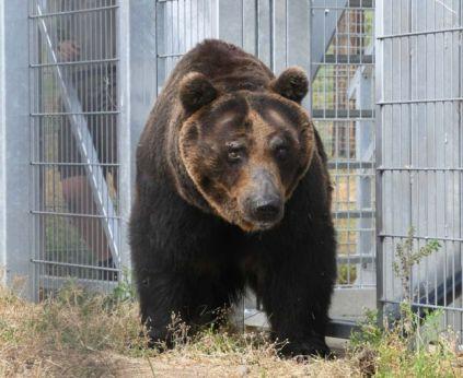 yorkshire bear