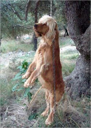 aufgehängter hund-griechenlad