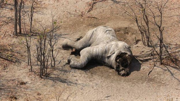 Elefant ohne Border2