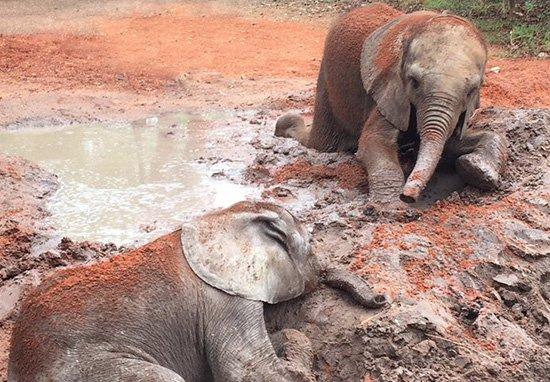Elephants_Without_Borders