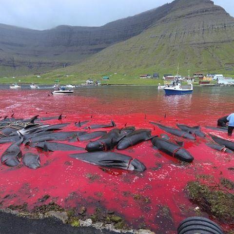 Faröer Insel Schlacht
