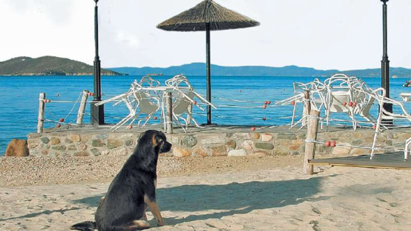 greece-Streune am Strand34a7
