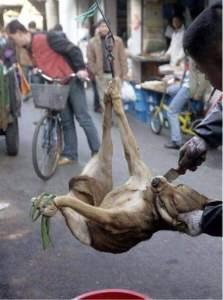 Hängender Hund in China_n