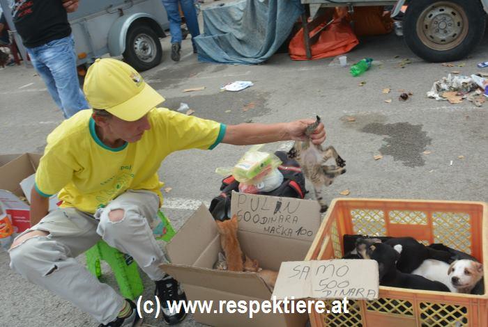 Hunde Markt in Serbien 2
