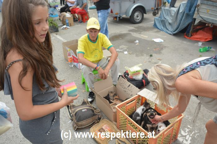 Hunde Markt in Serbien 3