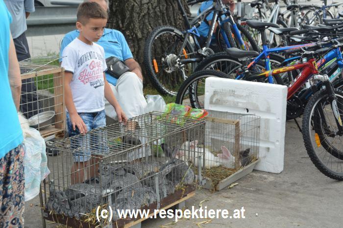 Hunde Markt in Serbien 5