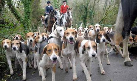 hunt hounds 2