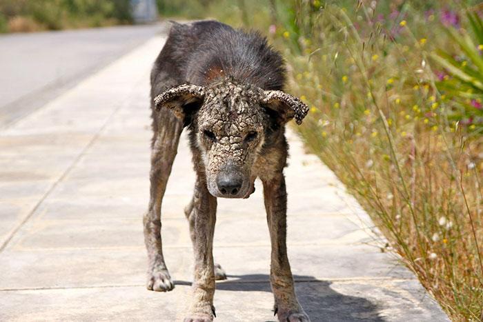 Kranker Hund Griechenland-2