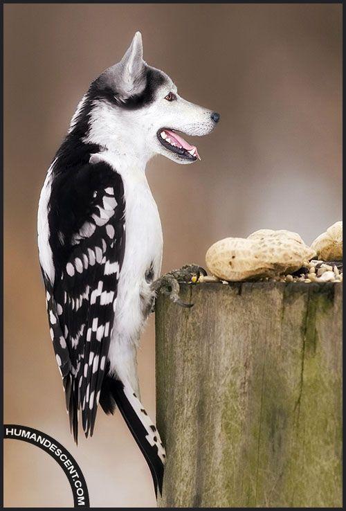Wolf + Bird = Wolfird