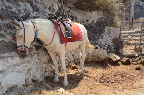 Pferd in knaller SDonne-Santorini