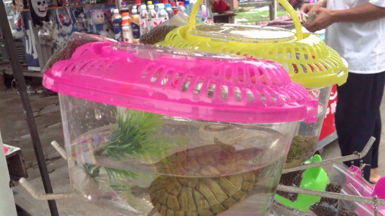 Schildkröte in Behälter