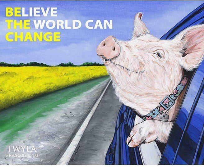 Schwein im Auto be the change