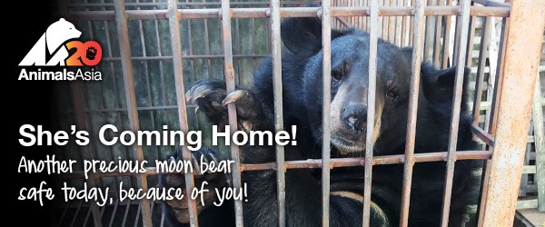 sept coming home AA moon bear