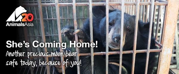 sept coming home AA moon bear
