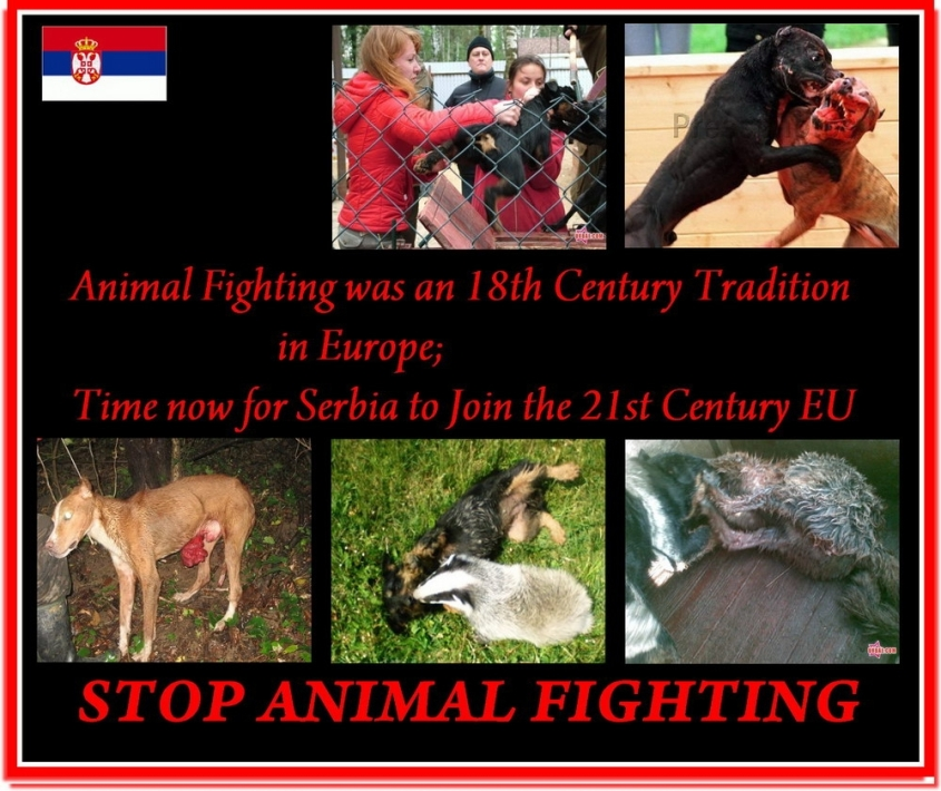 stop animal fighting 1.jpg