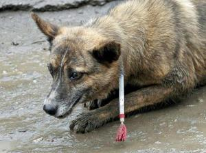 tiere-allein-in-bukarest-sollen-etwa-65-000-strassenhunde-leben