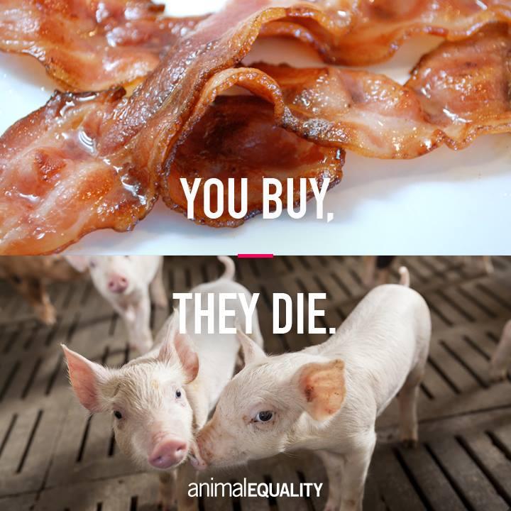 You buy they die_n
