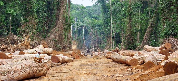 abgeholzter Waldr