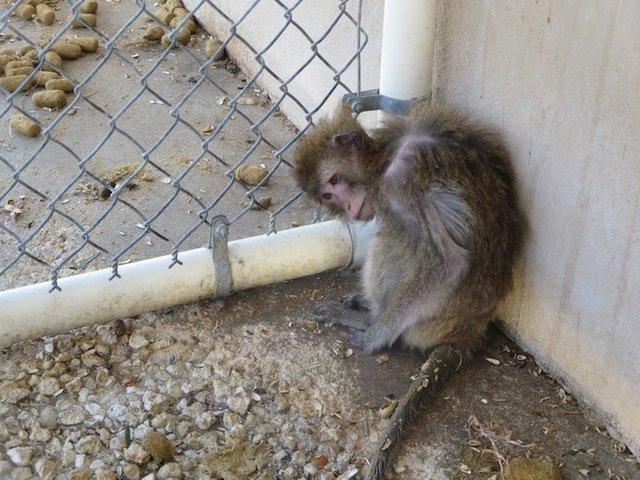 Affe bei PPI