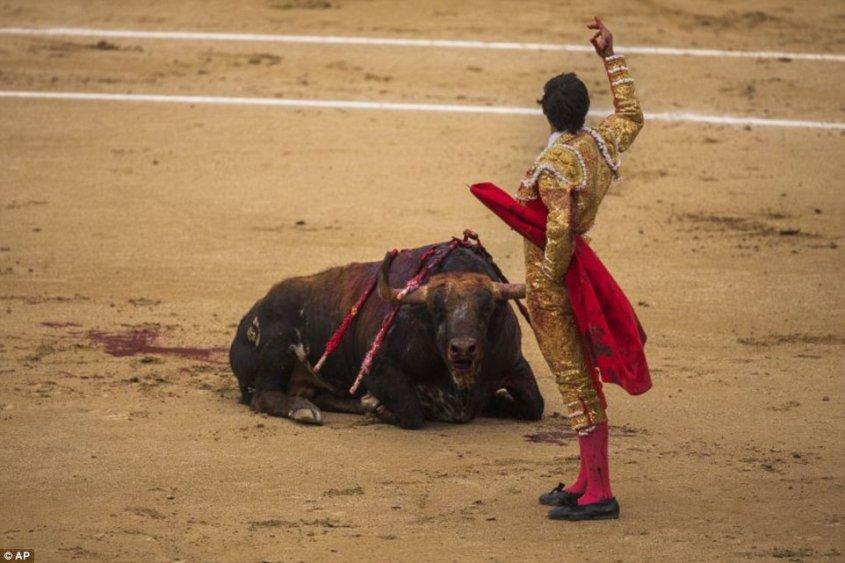 bull july 5
