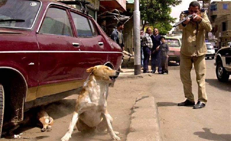 egypt strays shoot
