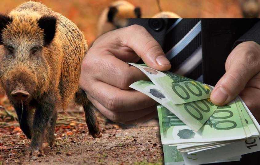 Geld für Mord von Wildschweine