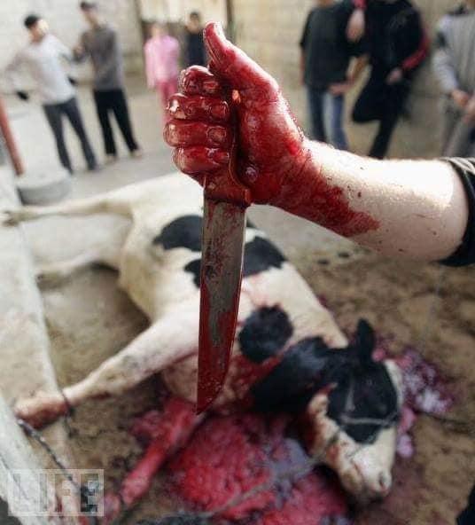 Hand mit Messer und Blut_n