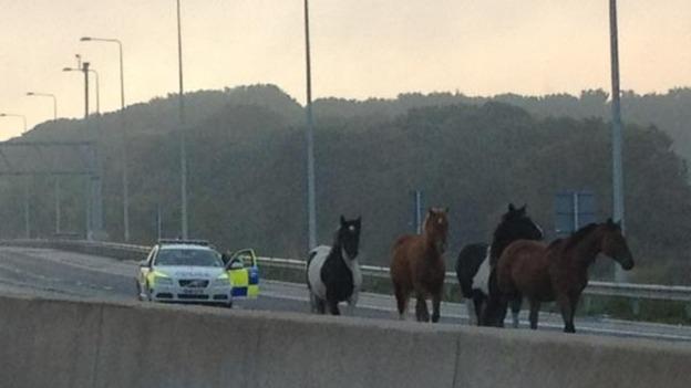 Horses M25 1