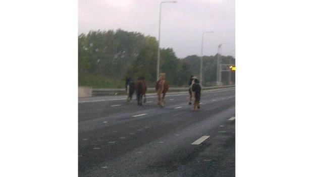 Horses M25 2