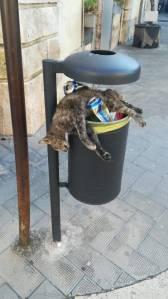 Katze auf Abfallkorb