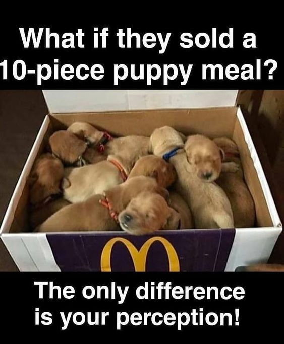 Mac puppy meal