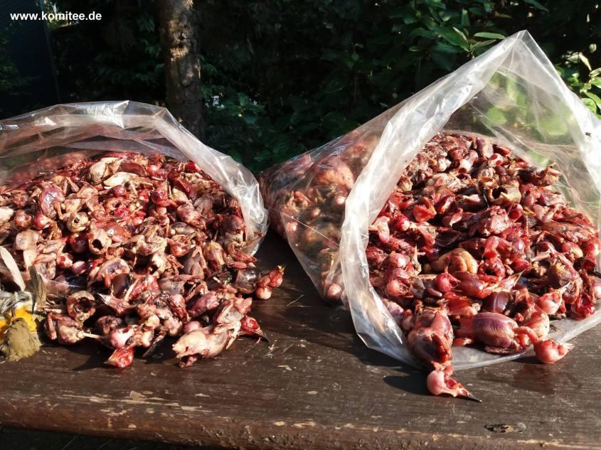 Rotkelchen.Kommite gegen den Vogelmord_o