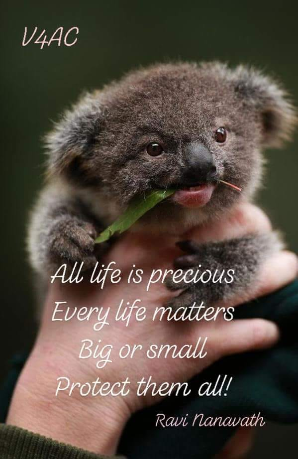 all life is precious_n